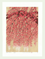 http://www.fujiarts.com/japanese-prints/Namiki/4WeepingCherry19f.jpg